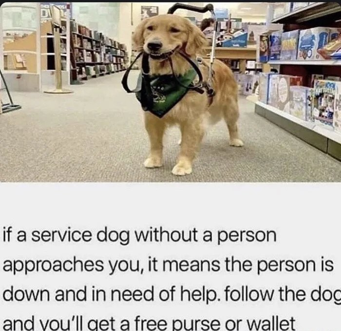 if a service dog without a person approaches you, it means the person is down and in need of help. follow the dog and you'll get a free purse or wallet